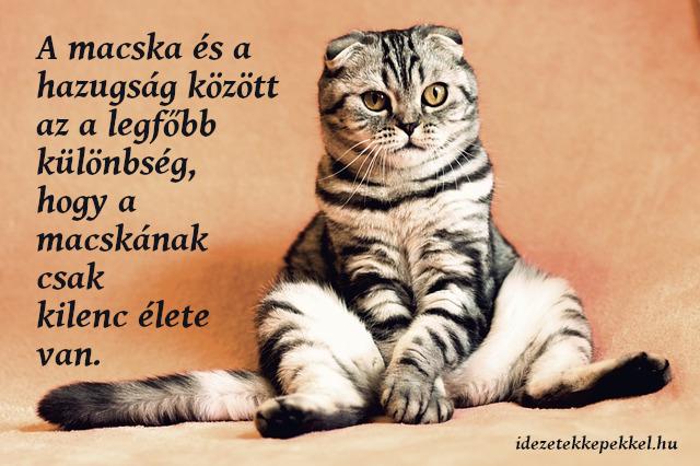 macskás idézet hazugság