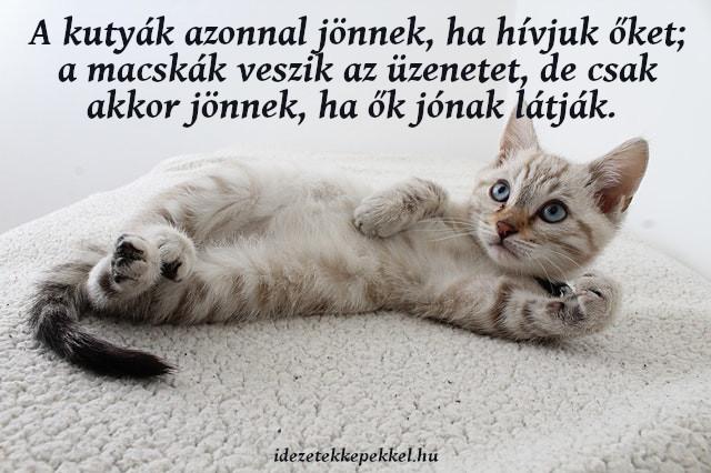 macskás idézet, jön