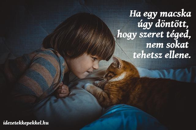 macskás idézet, szeretet