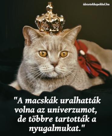 macskás idézet uralhatták volna