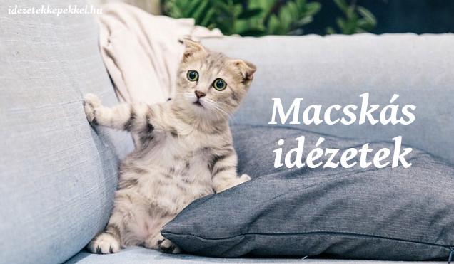 macskás idézetek
