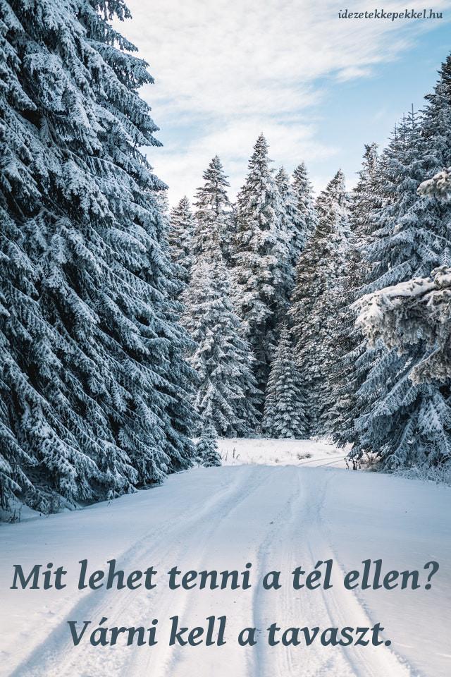 vicces tél idézet, Mit lehet tenni a tél ellen? Várni kell a tavaszt.
